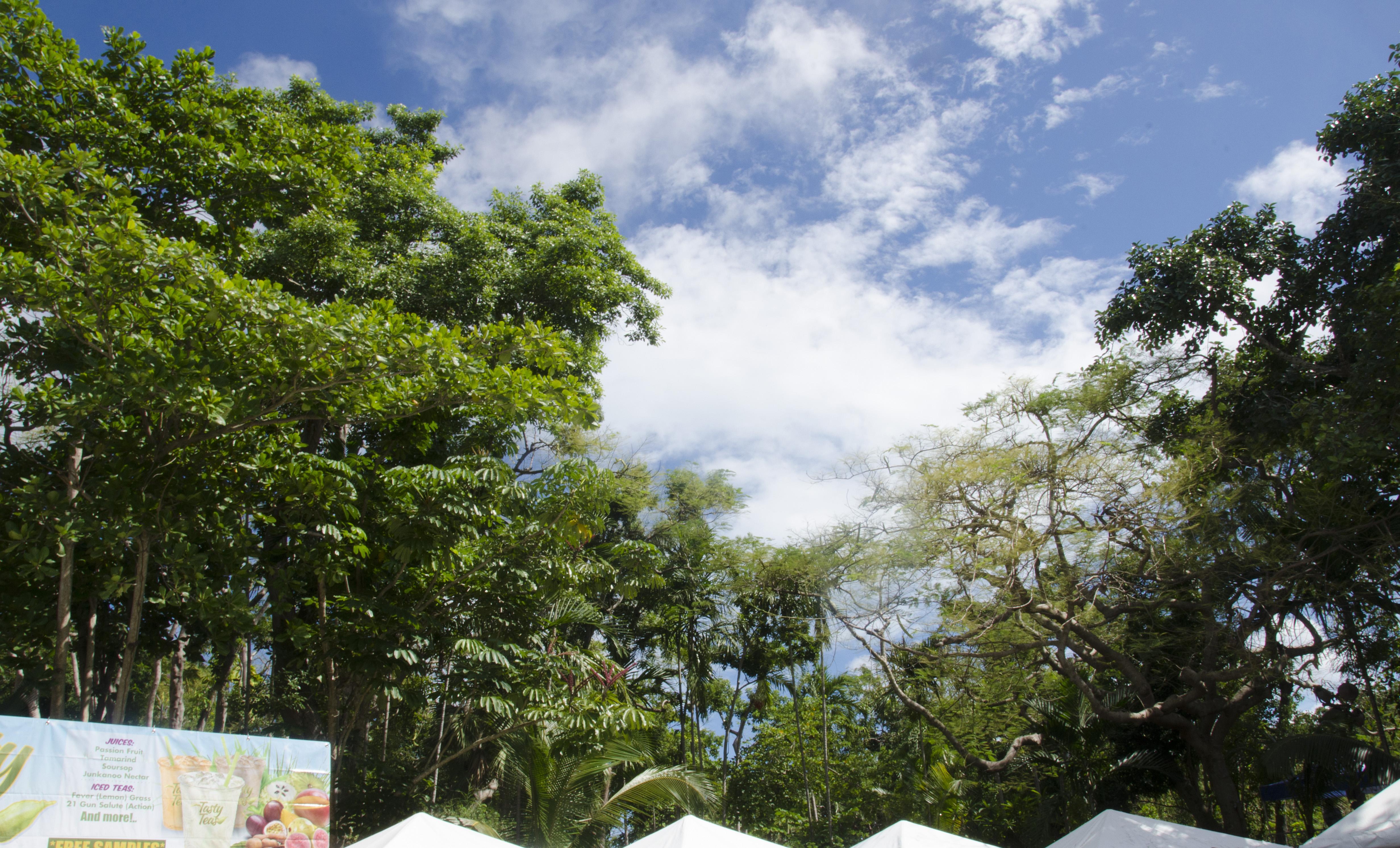 Sky over Botanical Gardens at International Cultural Festival