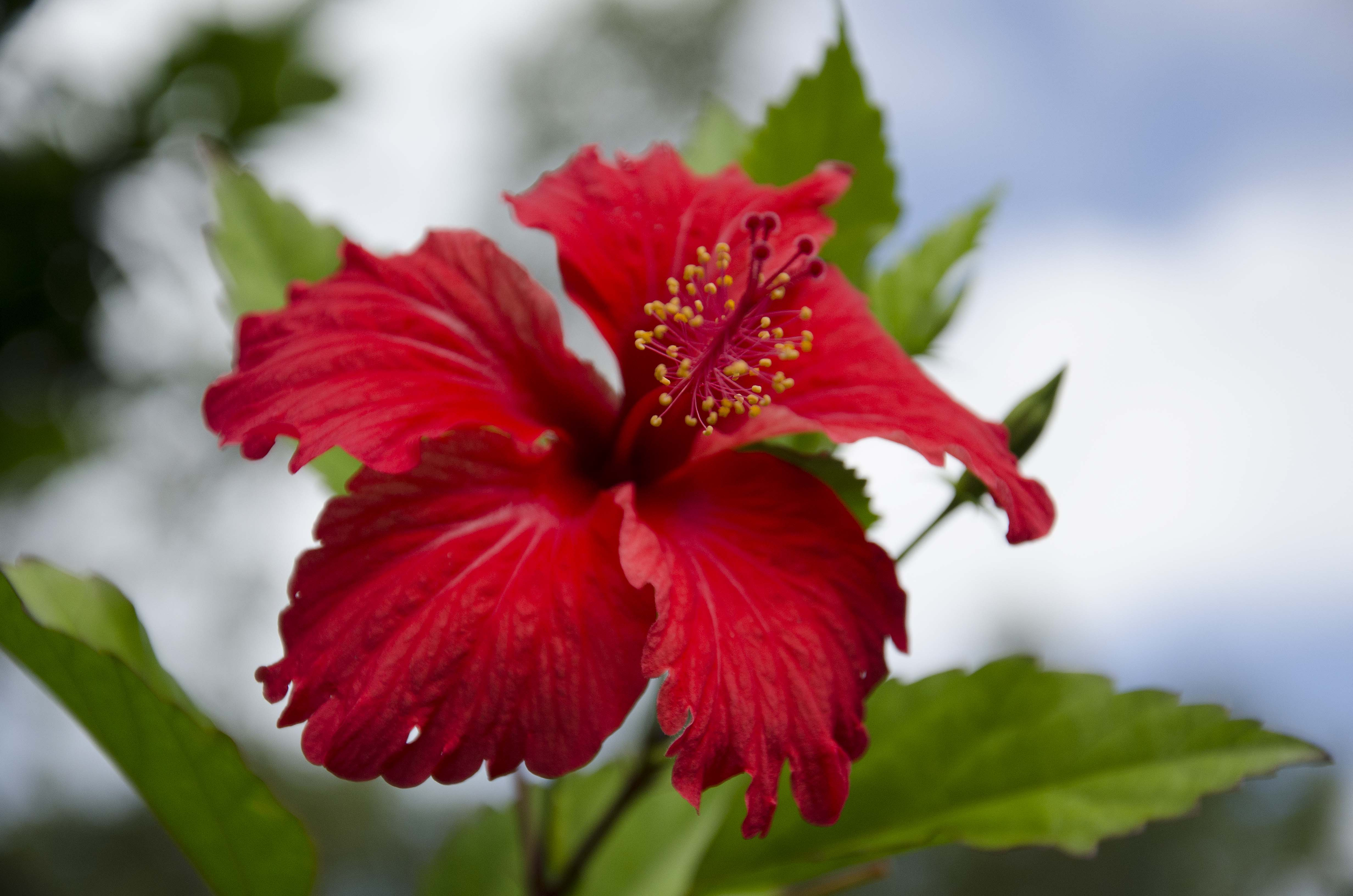 Hibiscus honey the tines that bind hibiscus and butterfly hibiscus flower 2 izmirmasajfo