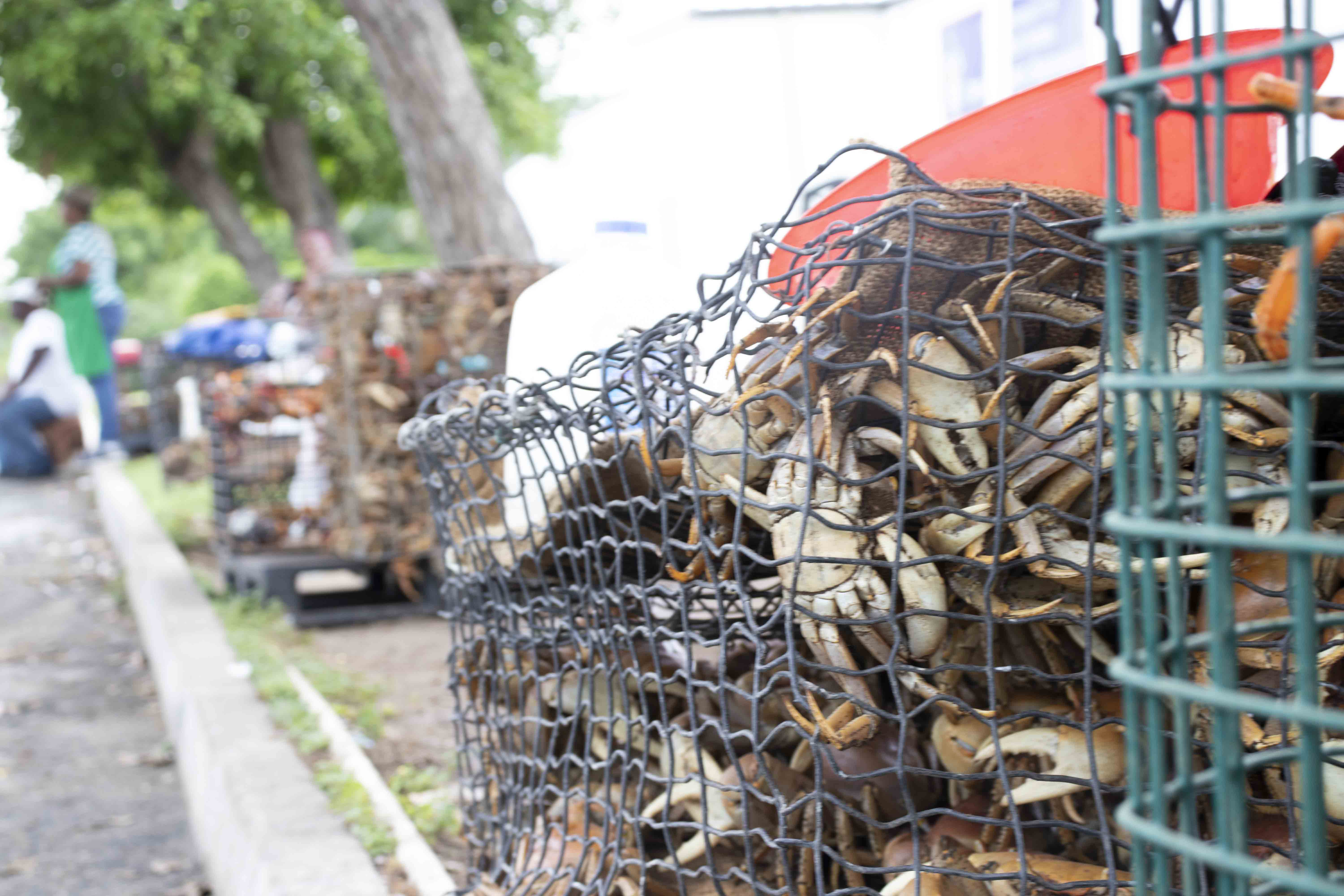 Row of crab crates